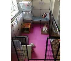 Large indoor rabbit enclosures Video