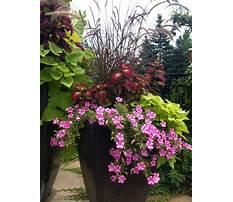 Large planter ideas full sun Video
