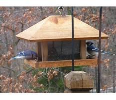 Large wood bird feeders Video