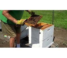 Making splits honey bee hives Video
