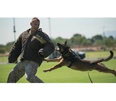 Marine corps dog training.aspx Video