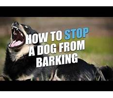 Medication to stop dog barking Video