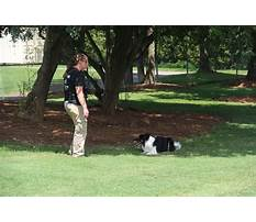 Military dog training tutorials.aspx Video