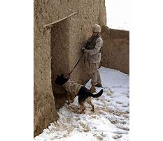 Military working dog training videos.aspx Video