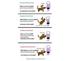 Negative punishment dog training Video