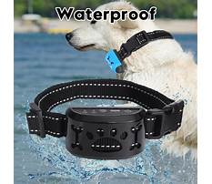 No barking dogs Video