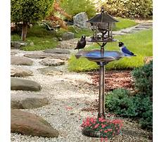 Outdoor bird feeder stands Video