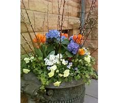 Outdoor planter ideas for spring Video