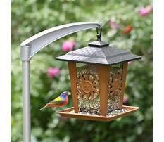 Outside bird feeder poles Video