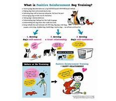 Paper training a housebroken dog.aspx Video