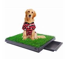 Patio potty training dogs.aspx Video