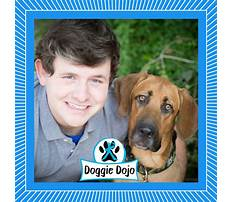 Paws off dog training.aspx Video