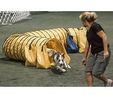Pawsitive energy dog training.aspx Video