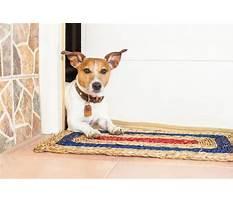 Pee pad trained dog peeing on carpet.aspx Video