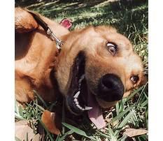 Pensicola dog training facility.aspx Video