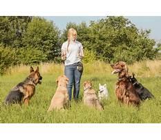 Pet dog training instructors Video