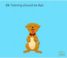 Pets at home dog training.aspx Video