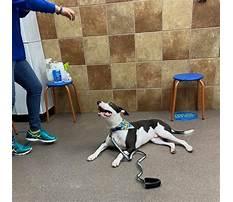 Petsmart dog training supplies.aspx Video