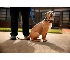 Pitbull dog training classes.aspx Video