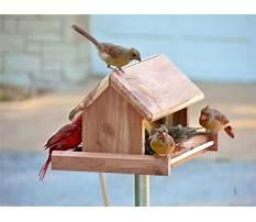 Plans for building a cardinal bird feeder Video
