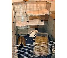 Playpens for bunnies in your house Video