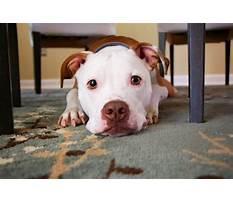 Potty training regression dog.aspx Video