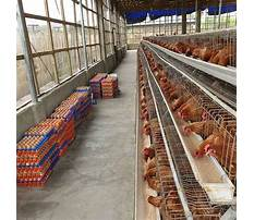 Poultry cages prices in kenya Video