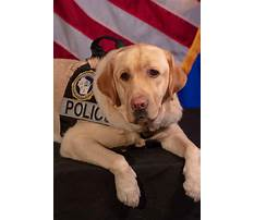 Prisoners training service dogs.aspx Video