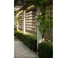 Privacy fence options diy Video