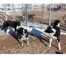 Progressive dog training greeley co Video