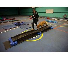 Proprioception dog training Video