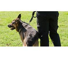 Protection dog training brisbane Video