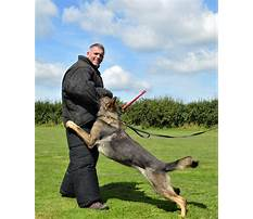 Protection dog training courses uk Video
