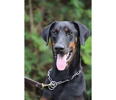 Protection dog training dfw Video