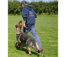 Protection dog training equipment uk Video