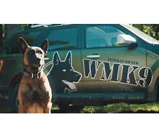 Protection dog training in michigan Video