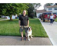 Protection dog training in tampa bay Video