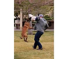 Protection dog training san antonio Video