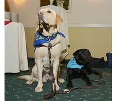 Ptsd service dog training jacksonville fl.aspx Video
