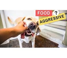 Puppy aggression Video