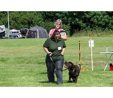 Puppy and dog training coventry Video