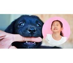 Puppy biting kids Video