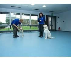 Puppy dog training school.aspx Video