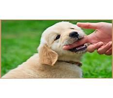 Puppy hand biting Video