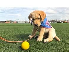 Puppy power dog training Video