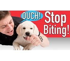 Puppy training to stop biting Video