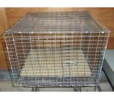 Rabbit cages for sale in indiana Video