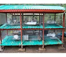 Rabbit housing design guide pdf Video