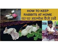 Rabbit information in hindi Video