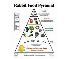 Rabbit nutritional management Video